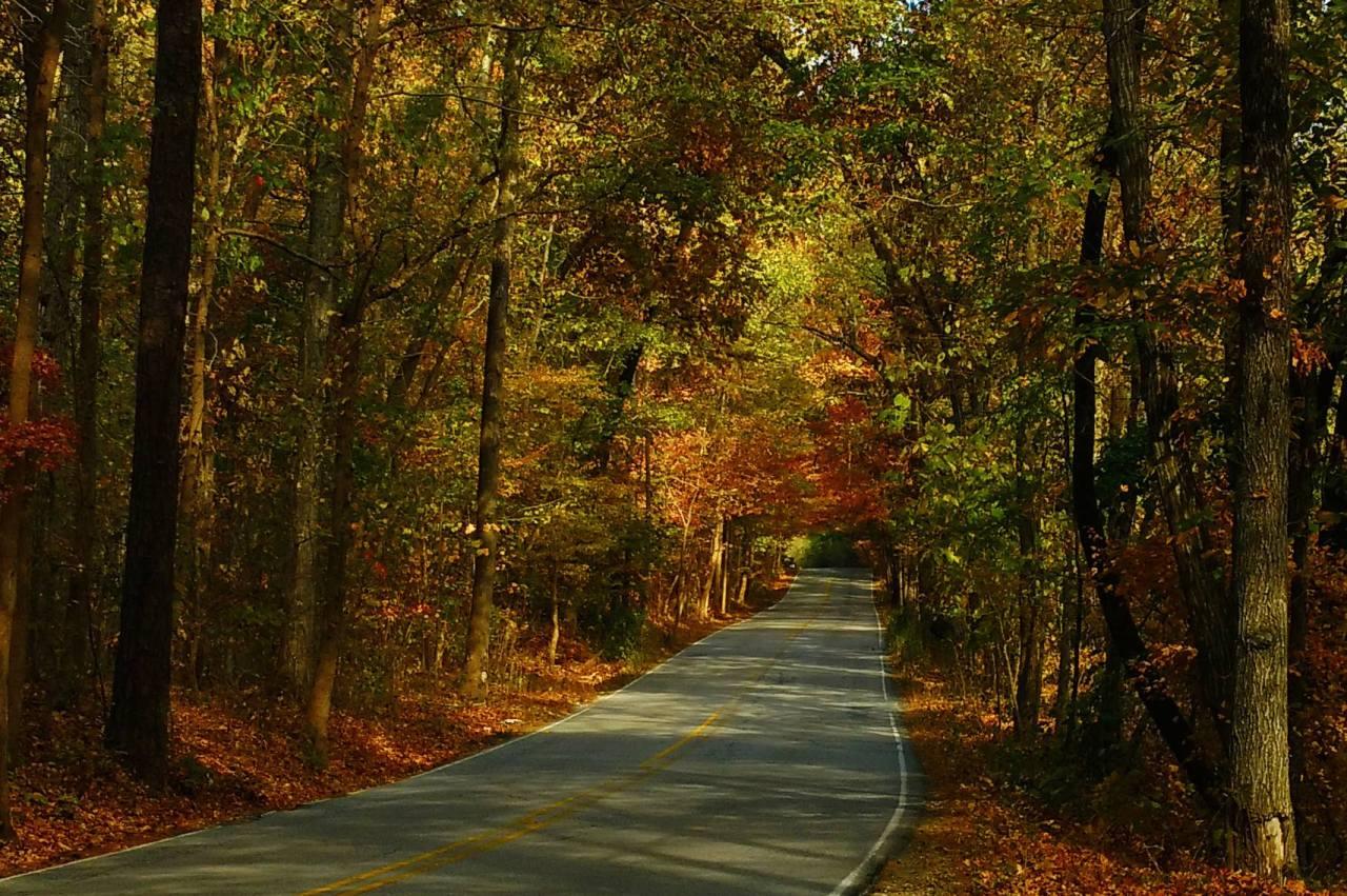 the-road-to-oak-mountain